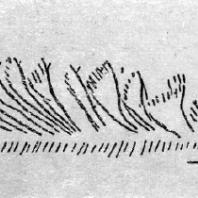 Стадо оленей. Резьба по кости орла из грота Мэрии в Тэйжа (Франция, департамент Дордонь). Верхний палеолит